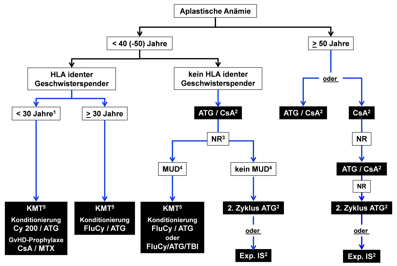 Algorithmus zum therapeutischen Vorgehen bei erworbener aplastischer Anämie des Erwachsenen