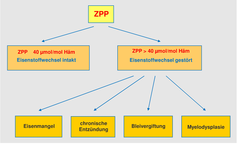 Zinkprotoporphyrin als Screeningparameter des gesamten Eisenstoffwechsels
